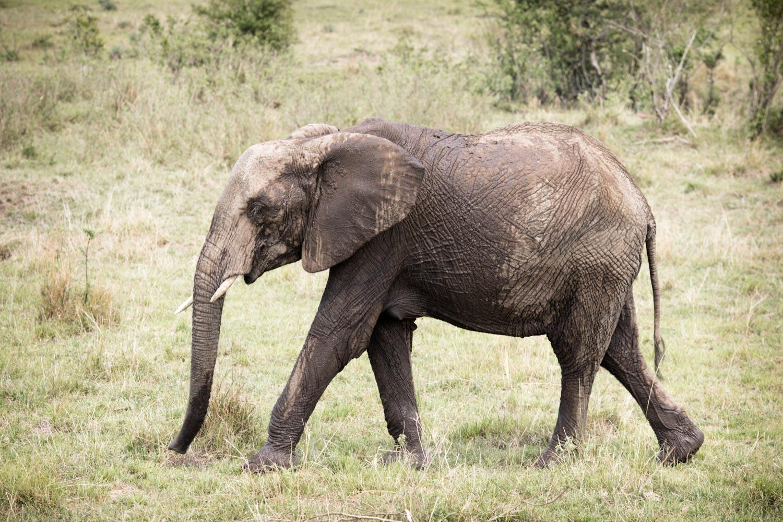 kenia1A1A5940